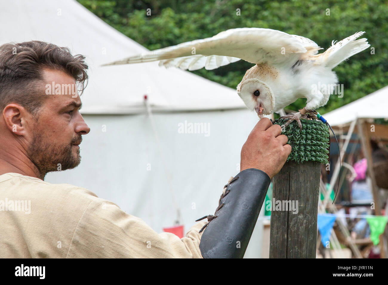 Bird of Prey Demonstration featuring a Barn Owl - Stock Image
