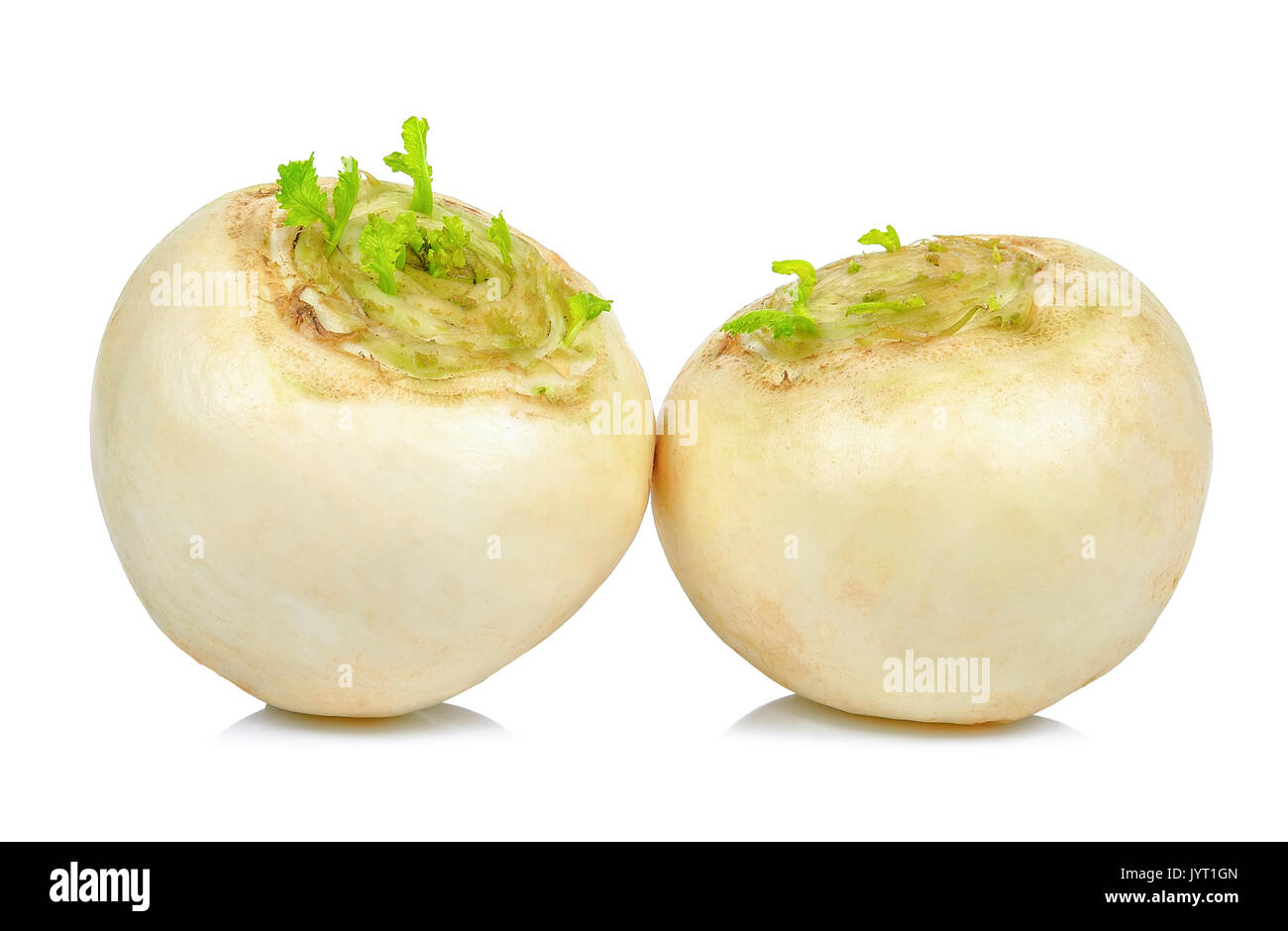 White turnip isolated on the white background. - Stock Image