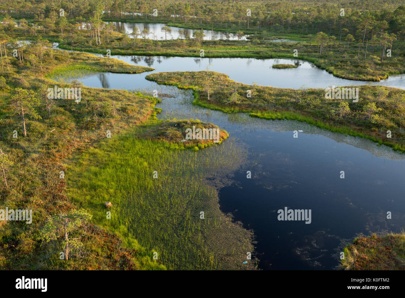 Wetland Biome Facts  Softschoolscom