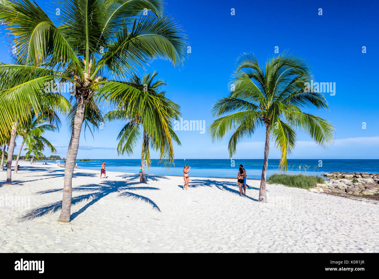 Royal Palm Trees For Sale West Palm Beach