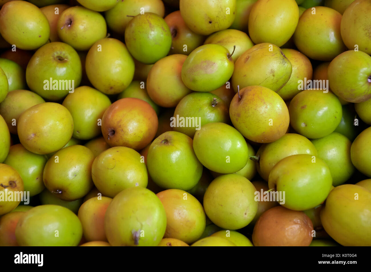 ziziphus tree stock photos amp ziziphus tree stock images