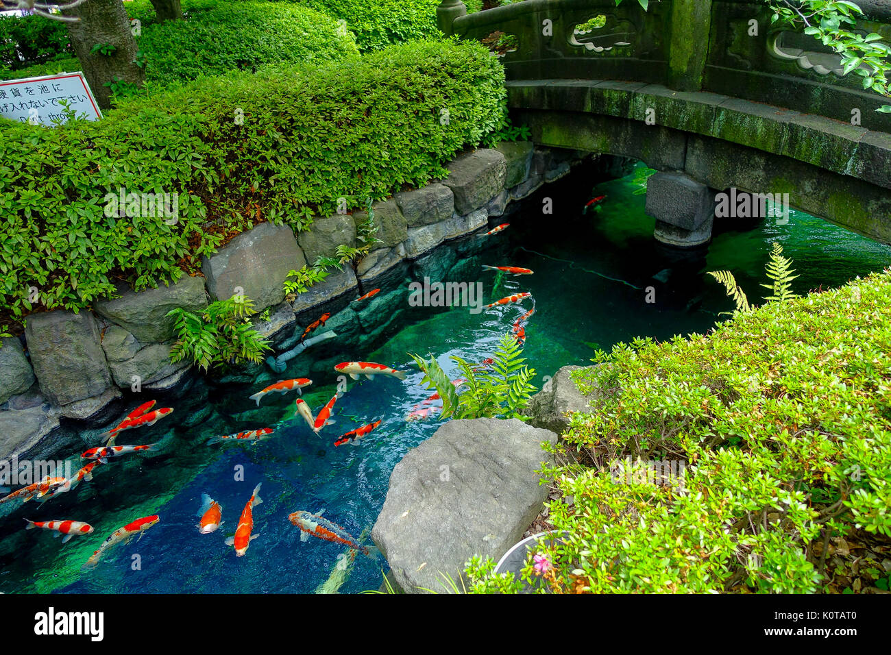 big fish small pond stock photos big fish small pond