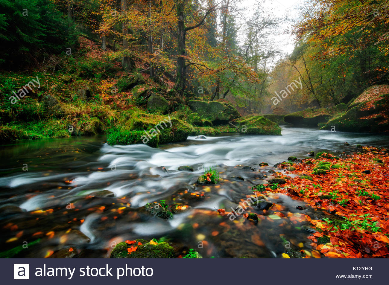 Rainy autumn river at Edmund Gorge of Bohemian Switzerland National Park with perfect water motion and foggy forest, - Stock Image