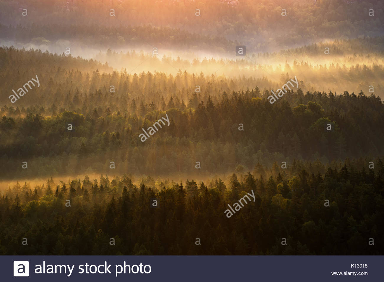 Beautiful foggy forest during autumn sunrise, Saxon Switzerland, Germany - Stock Image