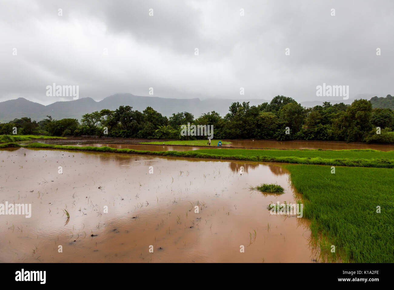 the india monsoon Learn all about the monsoon season rains and weather of the indian subcontinent and southern asia.