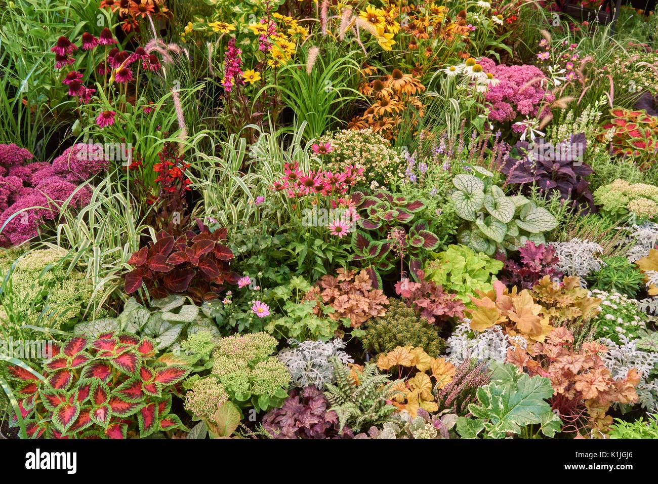 Pretty Border Plants Stock Photos & Pretty Border Plants