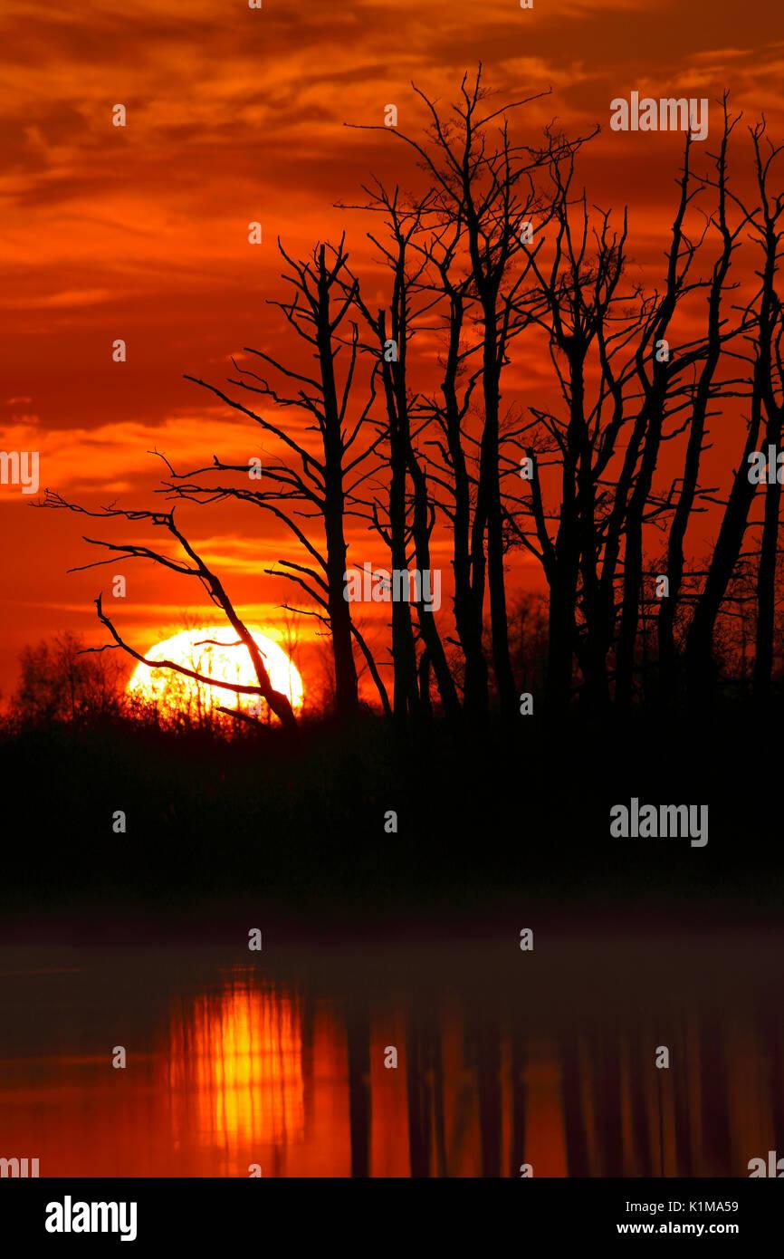 Sunrise over the Peene, natural park Flußlandschaft Peenetal, Mecklenburg-Western Pomerania, Germany - Stock Image