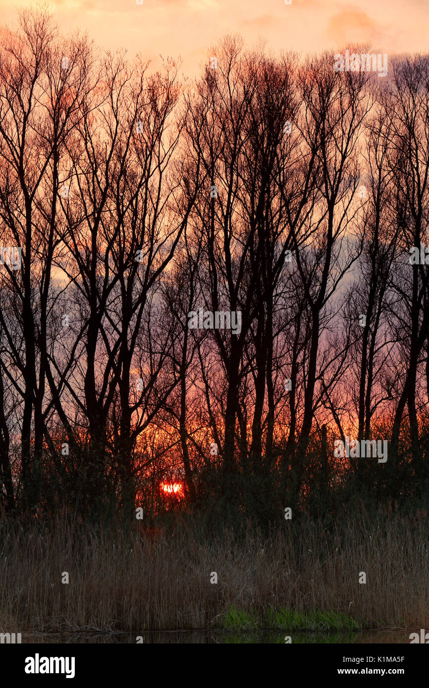 Sunset over the Peene, natural park river Flußlandschaft Peenetal, Mecklenburg-Western Pomerania, Germany - Stock Image
