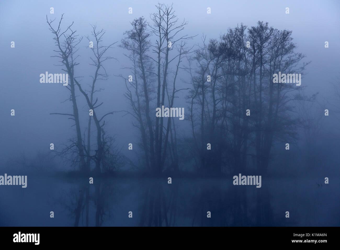 Foggy atmosphere in the morning in the Peene Valley, Naturpark Flusslandschaft Peenetal, Mecklenburg-Western Pomerania, - Stock Image