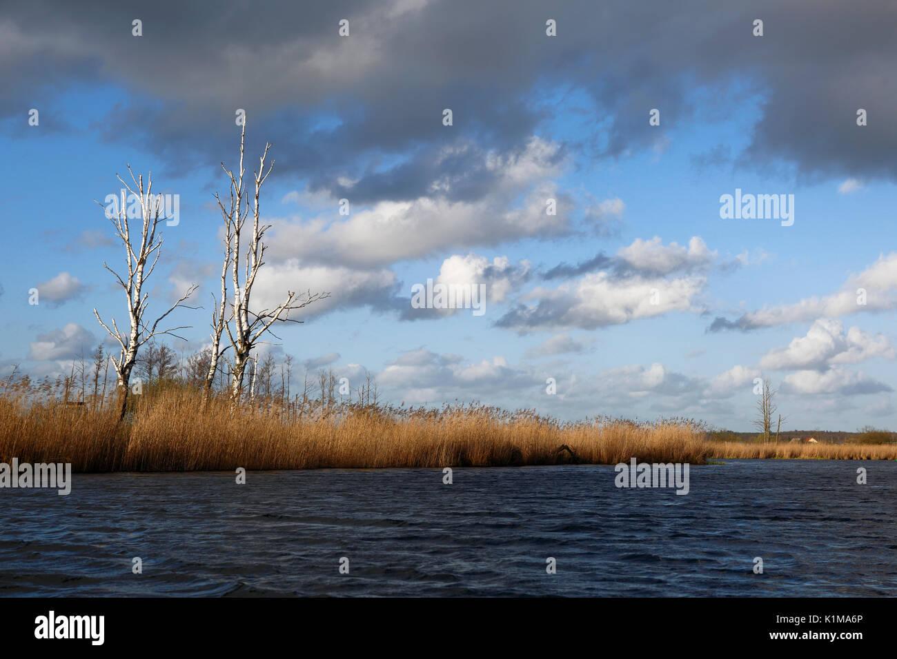 Landscape in the Peene Valley, Naturpark Flusslandschaft Peenetal, Mecklenburg-Western Pomerania, Germany - Stock Image