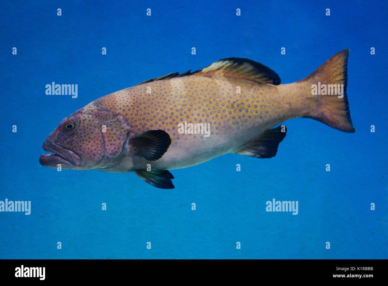 Fish gills water stock photos fish gills water stock for Big fish in the ocean