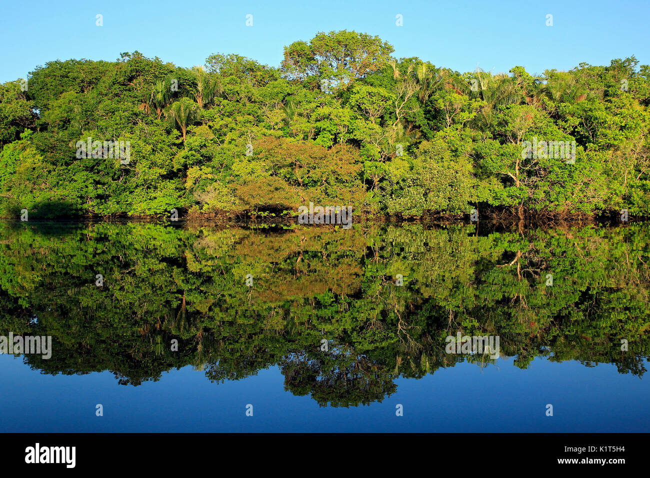 The Amazon Rainforest and Blue Sky Perfectly Mirrored in the Water. Amazonas, Brazil - Stock Image