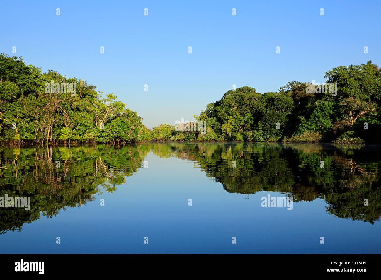 Amazon, the Amazon Rainforest, Amazonas, jungle, rainforest, forest, nature photography, nature wilderness, Brazil, - Stock Image