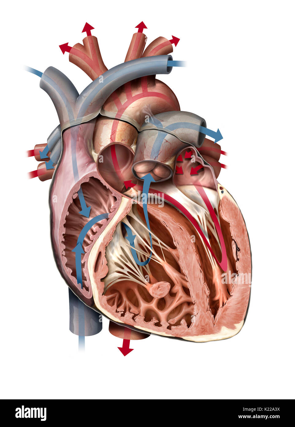the human heart and its rhythmic problems Heart rhythm problems (also known as arrhythmias) the cardiologists and   the human heart beats more than 100,000 times a day, and every single beat.