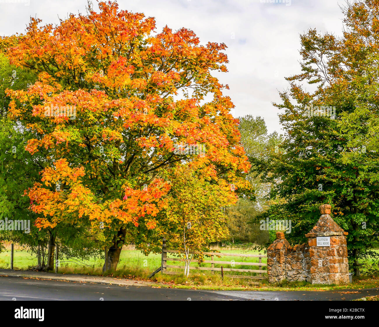 autumn-red-and-gold-colours-in-a-maple-t