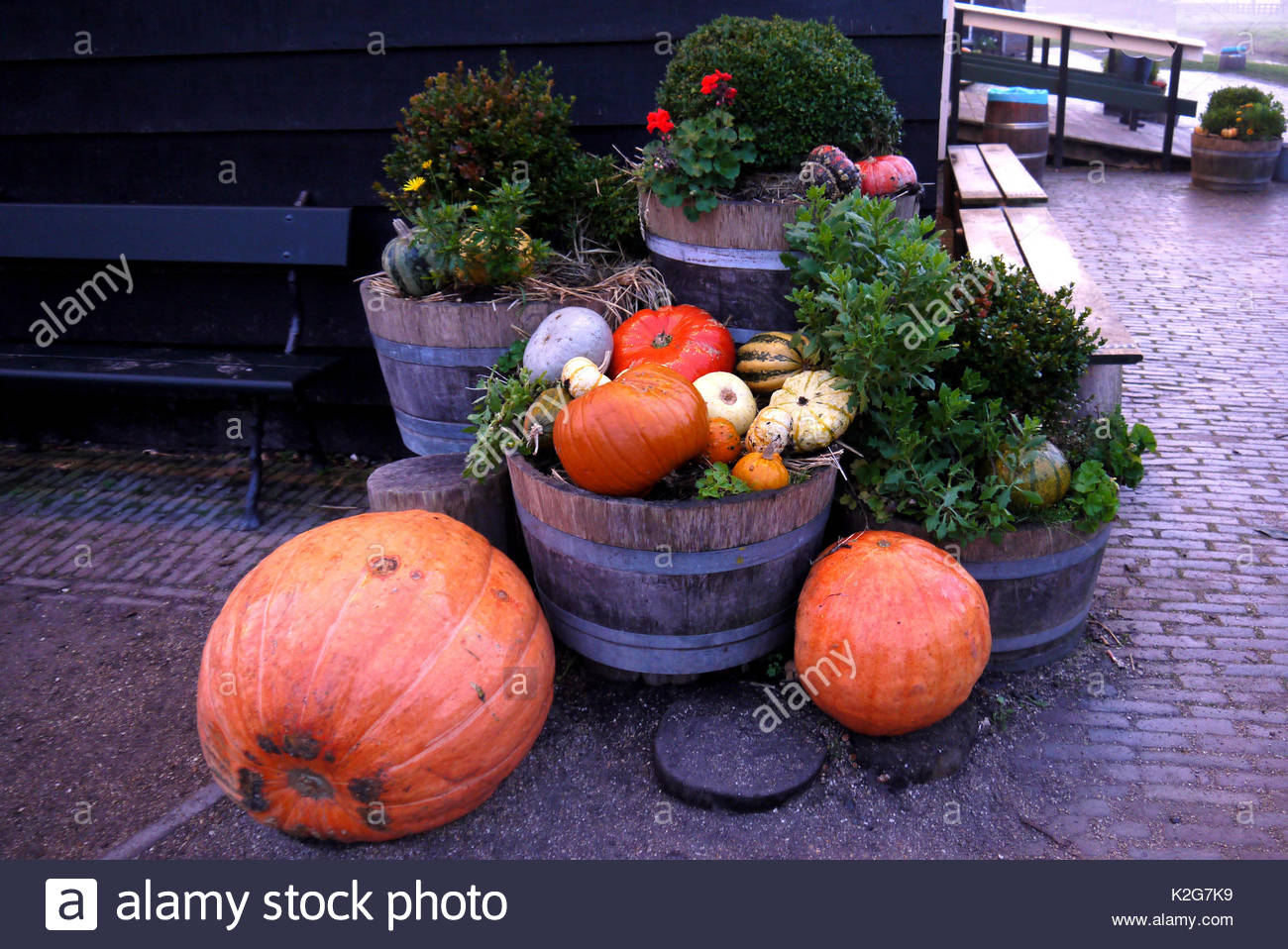 Pumpkins in basket and decorative corns. Defocused colorful leaves in the background - Stock Image