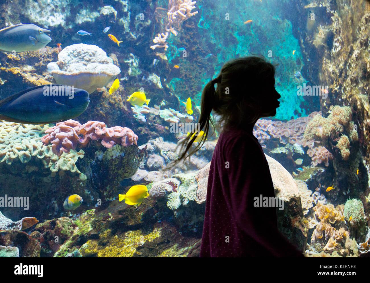 aquarium-the-great-aquarium-saint-malo-b