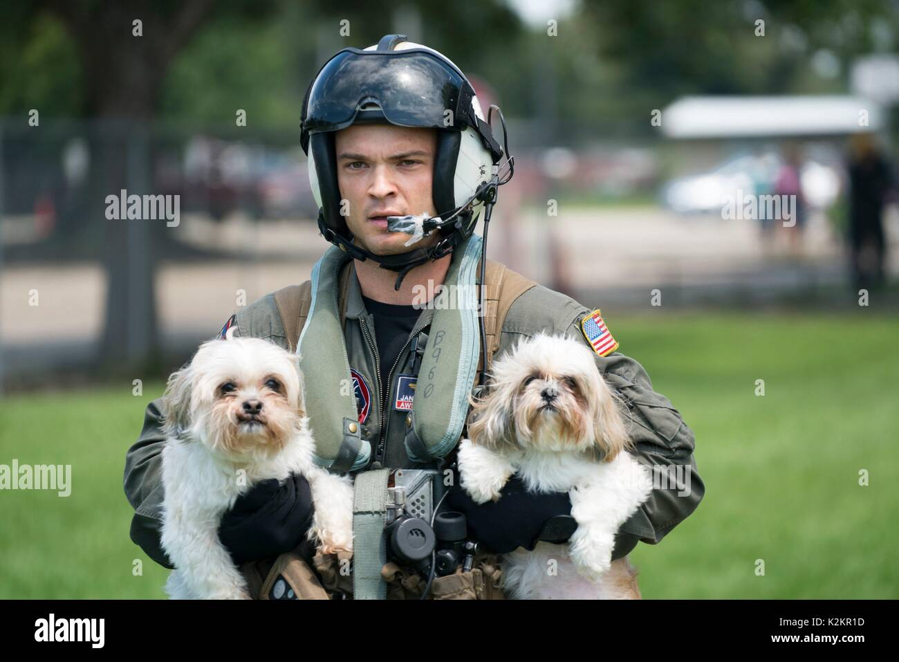Vidor, United States. 31st Aug, 2017. U.S Navy aircrew evacuate two dogs at Pine Forrest Elementary School, a shelter - Stock Image