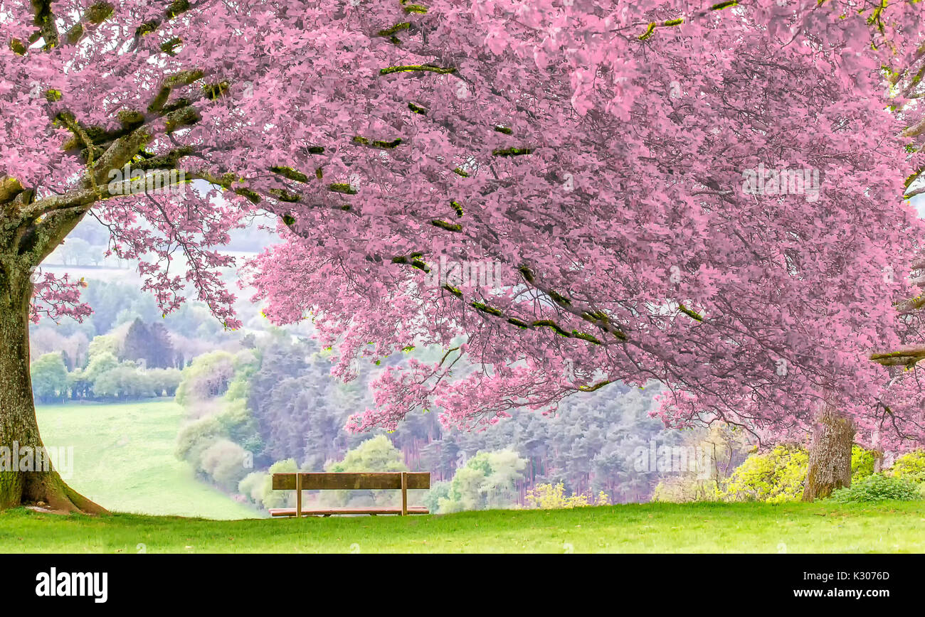 scenic-viewpoint-with-a-bench-and-tree-i