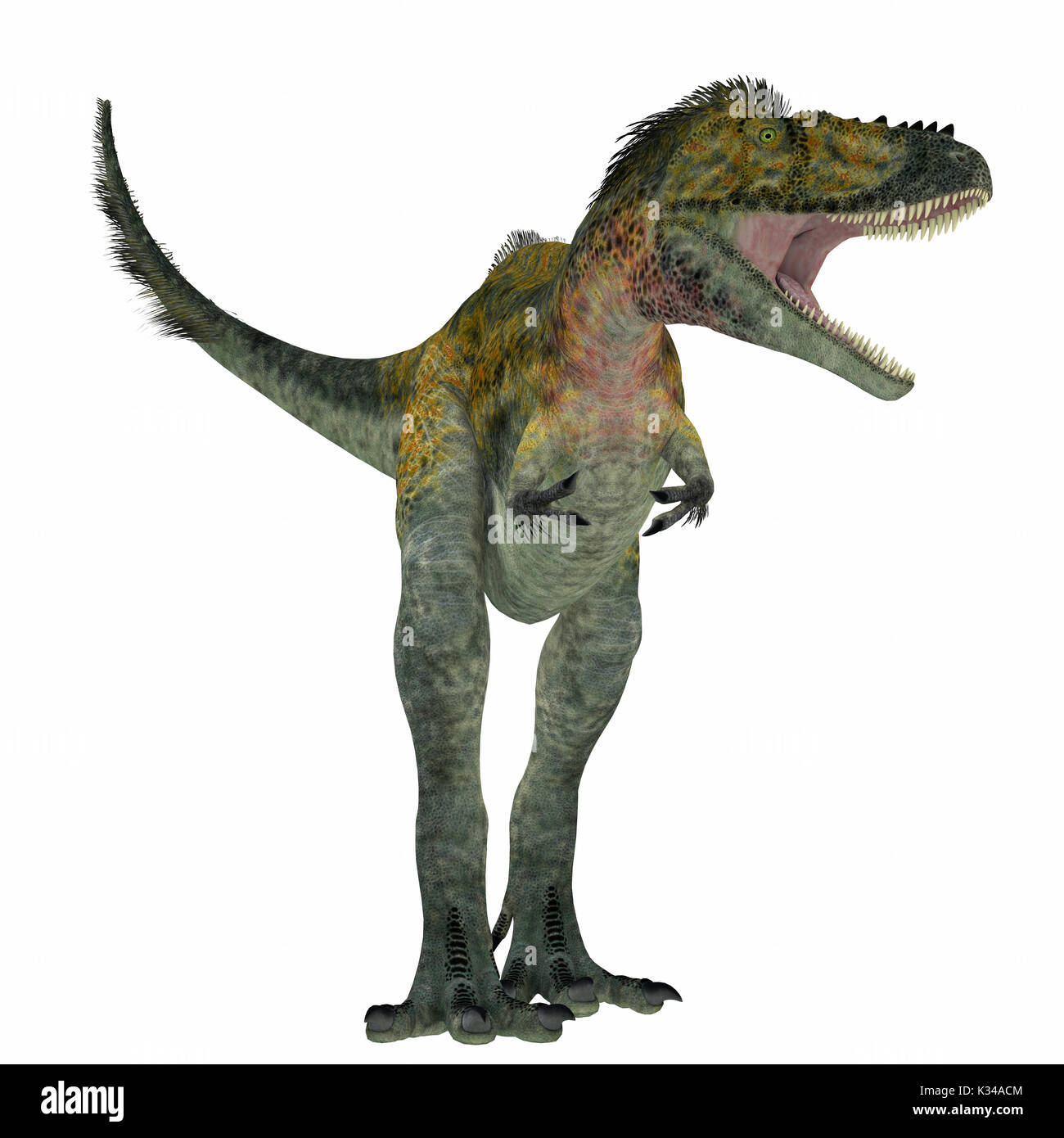 Alioramus was a carnivorous theropod dinosaur that lived in Asia in the Cretaceous Period. - Stock Image