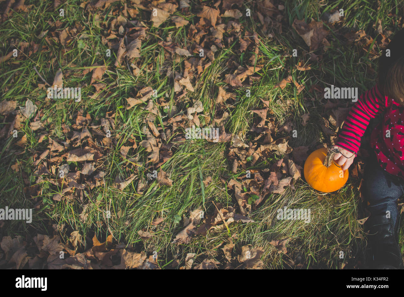 A baby sits in Fall leaves with her hand on a small pumpkin. - Stock Image