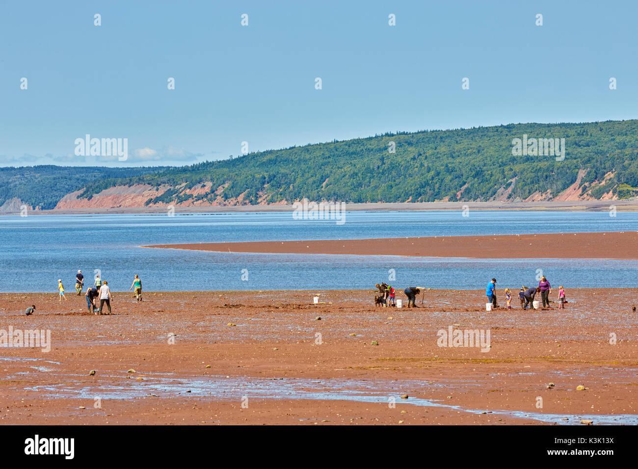 Clam digging at Five Islands Provincial Park, Bay of Fundy, Nova Scotia, Canada - Stock Image