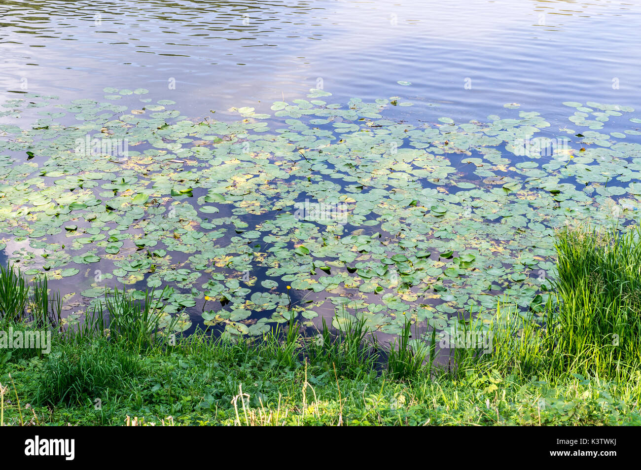Brushwood garden stock photos brushwood garden stock for Green water in pond