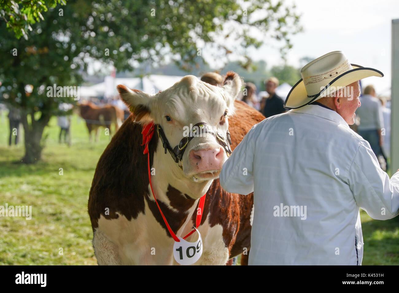 The Bucks Country Show Stock Photo