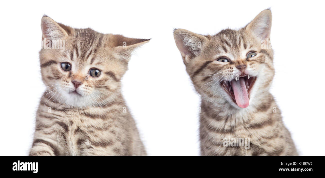 how to tell if cat is unhappy