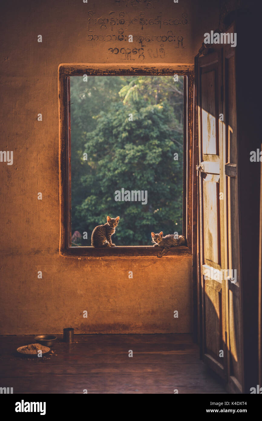 Small kittens sitting in the window of a Buddhist Montessori along my trek through Shan State, Myanmar, Burma. - Stock Image