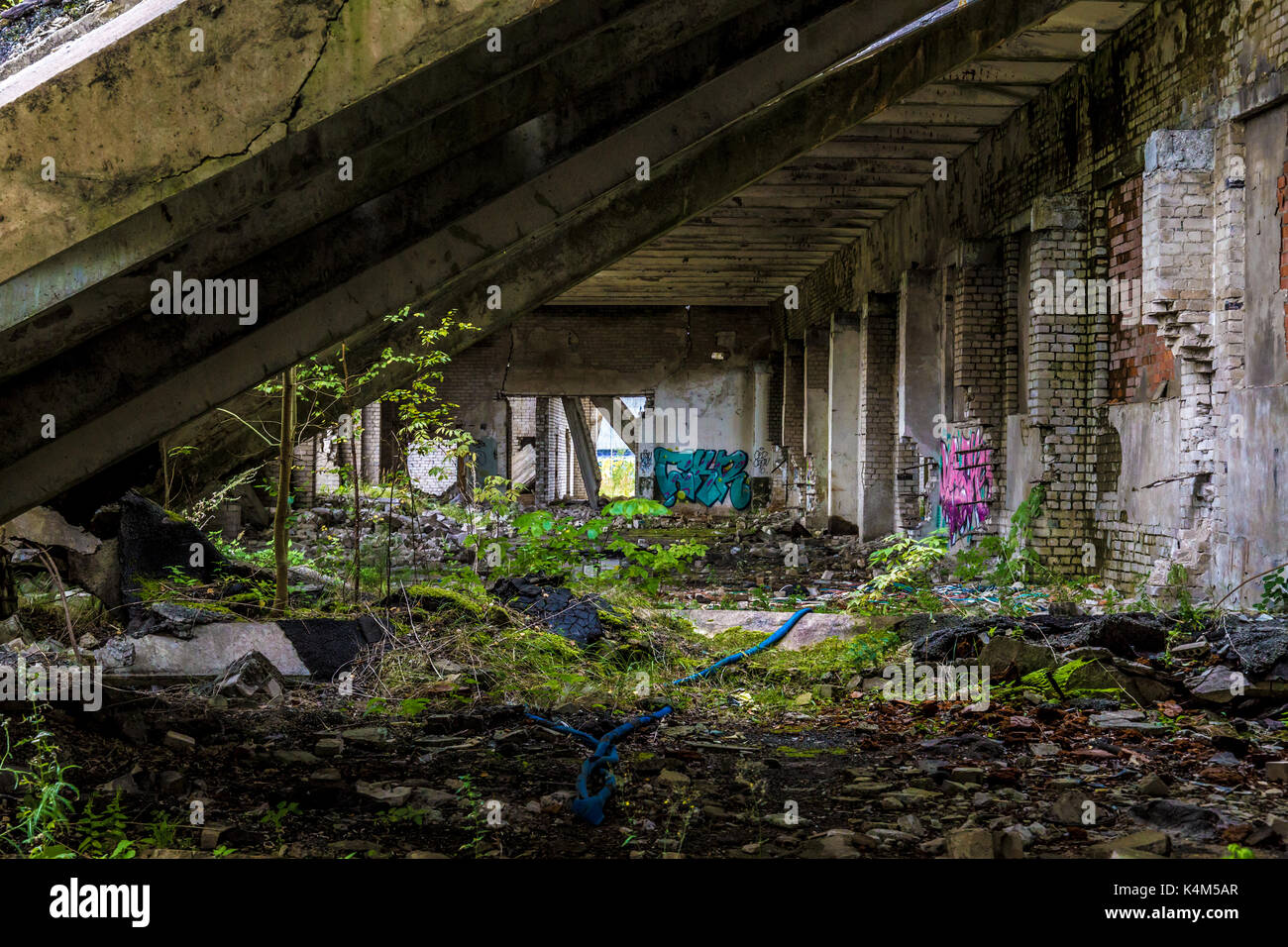 Old decayed building with green moss and trees growing inside - Stock Image