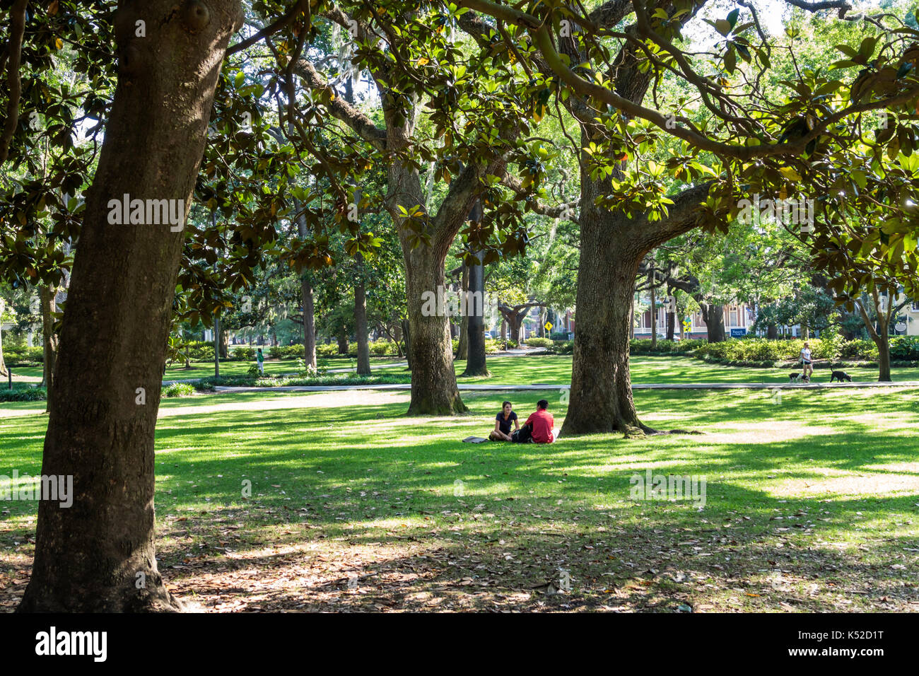 Savannah Georgia historic district Forsyth Park trees lawn - Stock Image