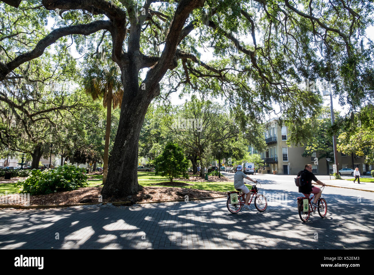 Savannah Georgia historic district Lafayette Square cyclist bicycle tree oak - Stock Image
