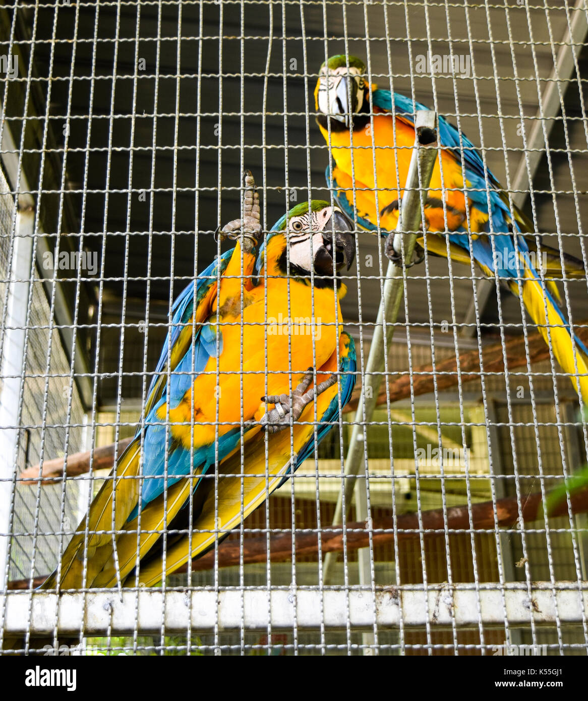 Parrots in the cage in the resort park ,look cute and pity. - Stock Image