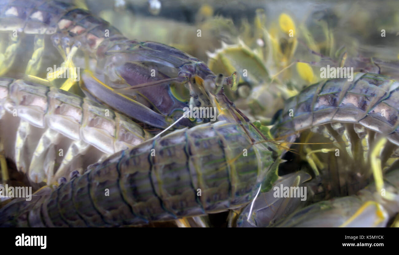 Shrimps china stock photos shrimps china stock images for Is a fish wet