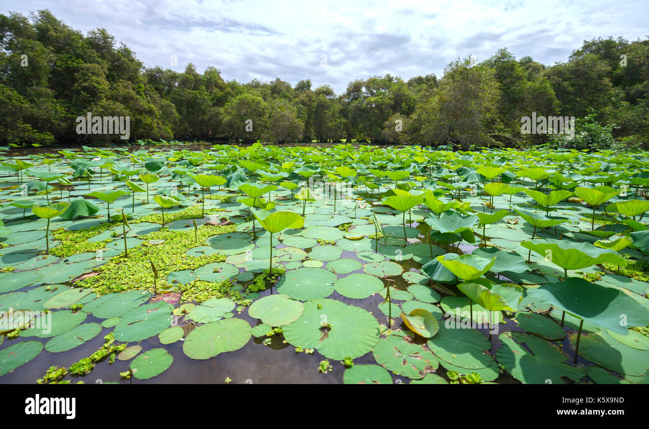 wetland ecosystem Why are wetlands important wetlands are important for so many reasons: the role of wetlands in an ecosystem wetlands prevent flooding by holding water much like a.