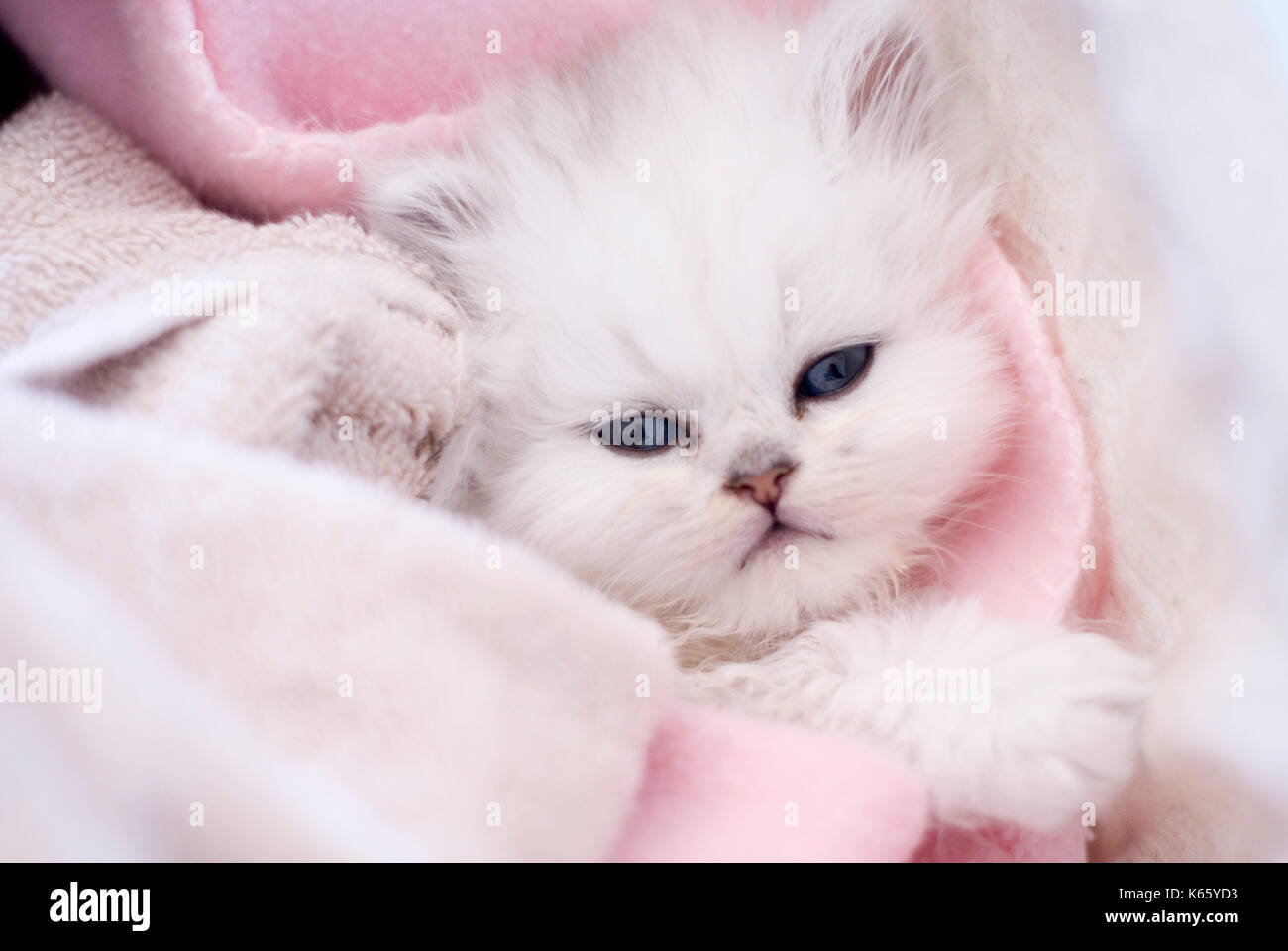 adorable-white-little-cat-in-a-basket-K6