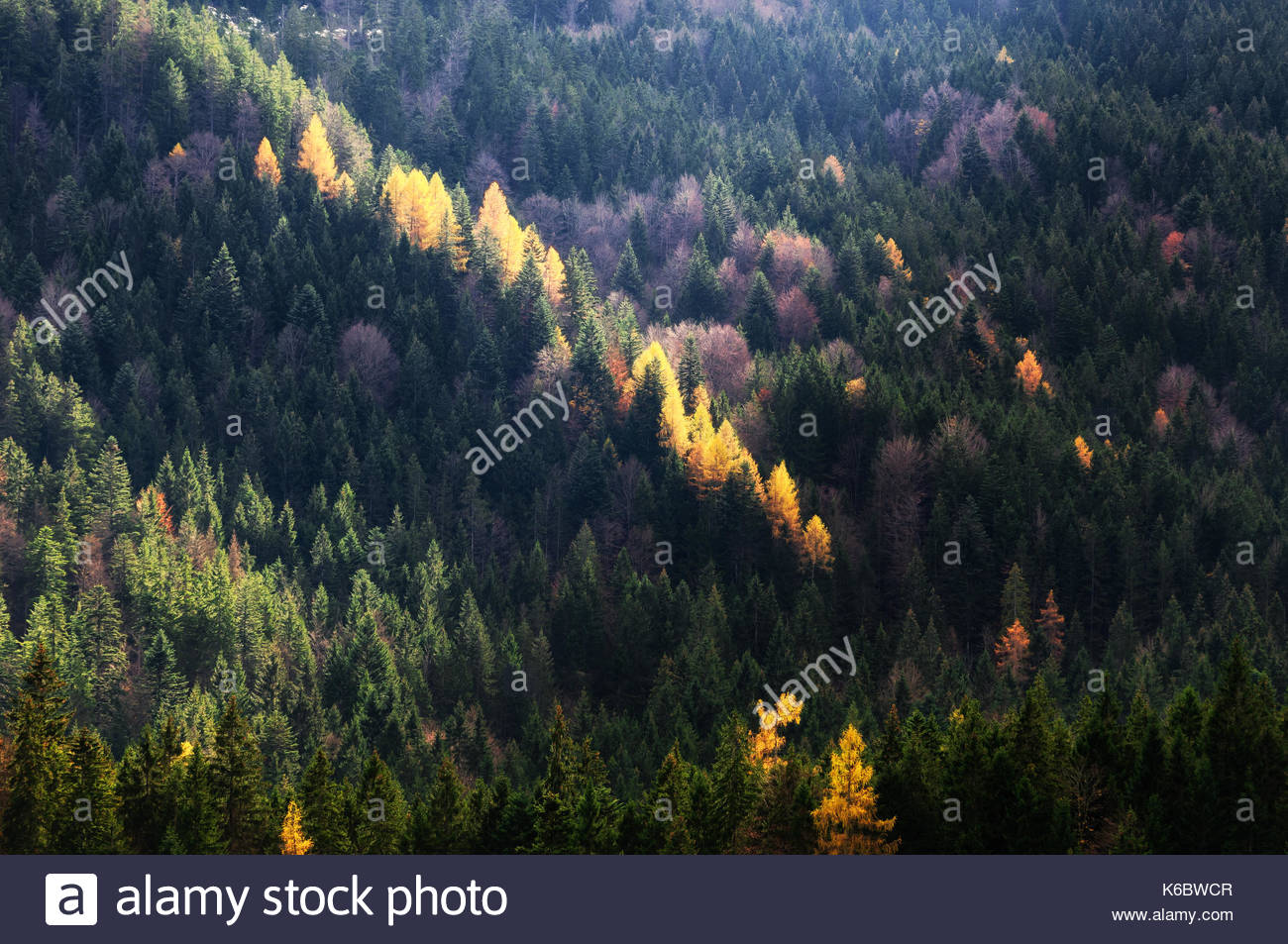 Autumn season theme. Detail of coloured forest. Sun beam shines on trees. Garmisch Partenkirchen, Bavaria, Germany - Stock Image