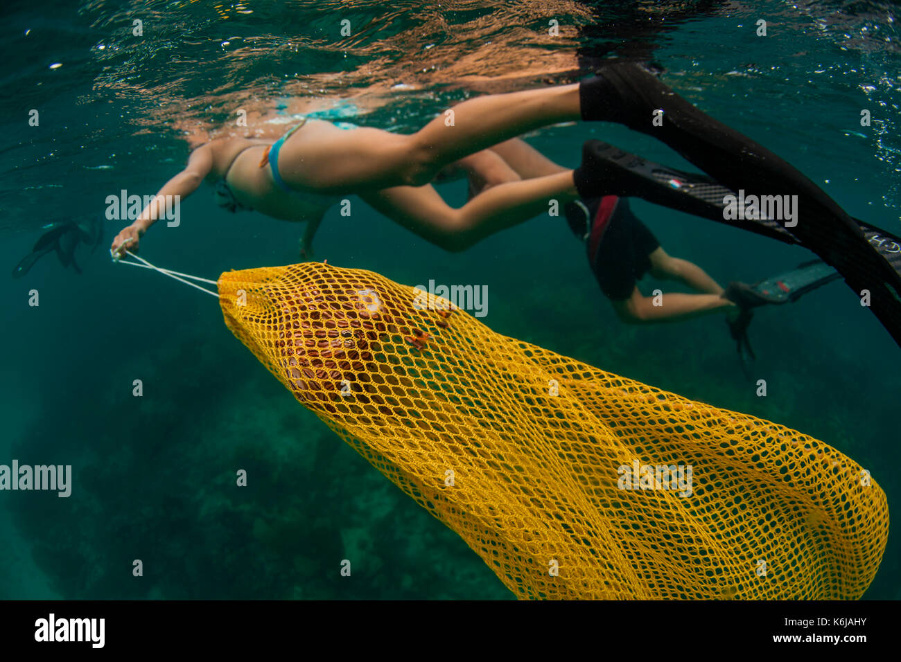Woman handling bagged lion fish after spearing it, Atlantic Ocean - Stock Image