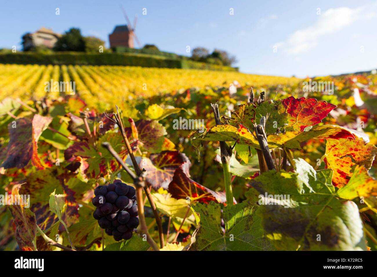 Mumm reims stock photos mumm reims stock images alamy for Champagne marne