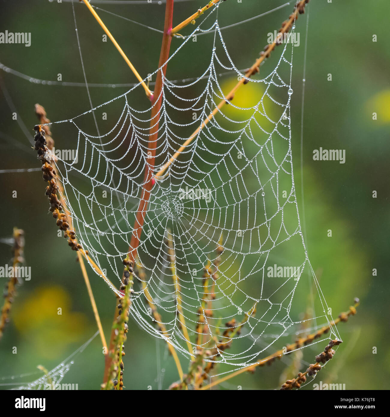 dew-covered-spider-web-on-tree-branches-