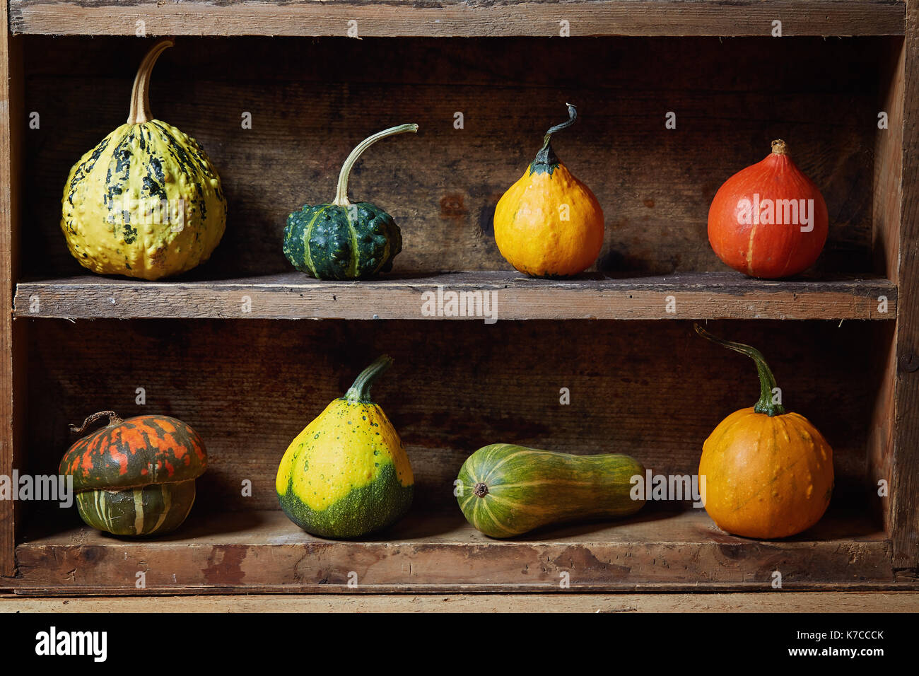 Assortment of different decorative and edible pumpkins on old wooden shelf. Still life with decorative gourd. - Stock Image