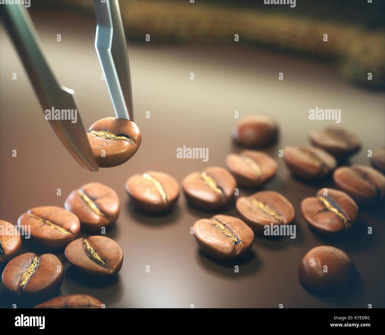 Tweezers selecting coffee bean, close up. - Stock Image