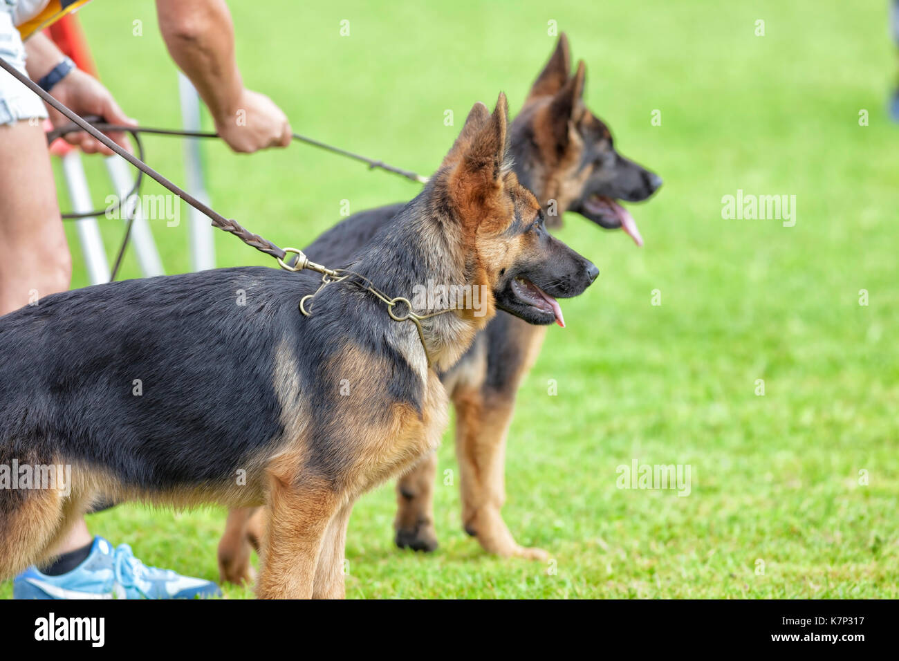 K Dog Training London