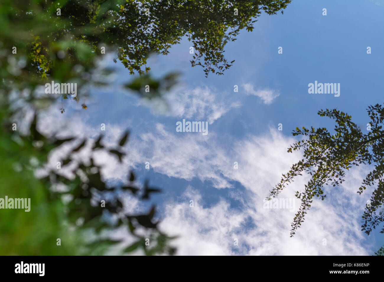trees-and-blue-sky-reflecting-in-still-w