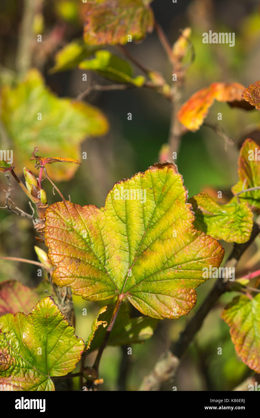 autumn-leaf-closeup-at-the-start-of-autu