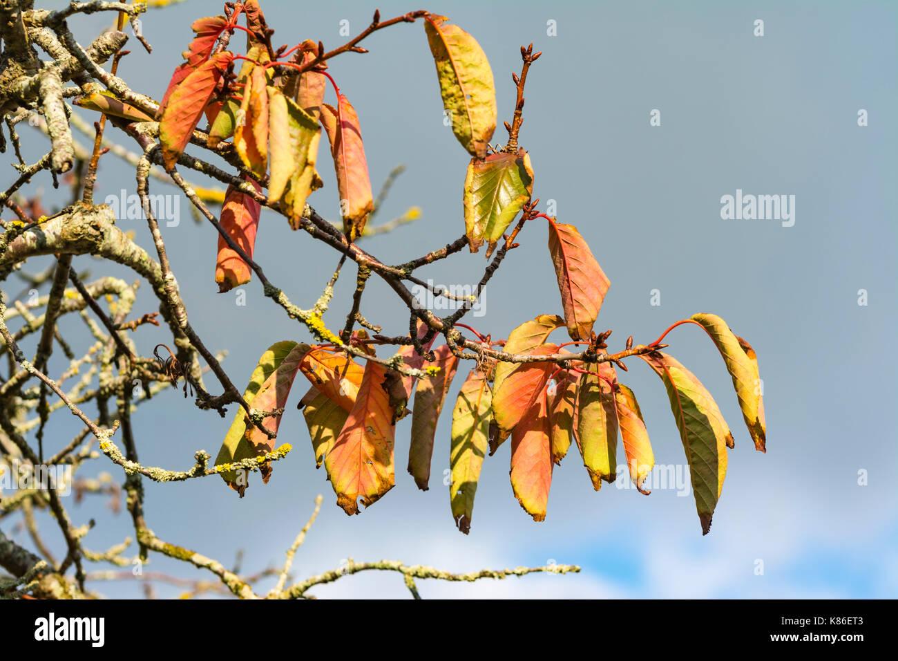 autumn-colours-fall-colors-colourful-lea