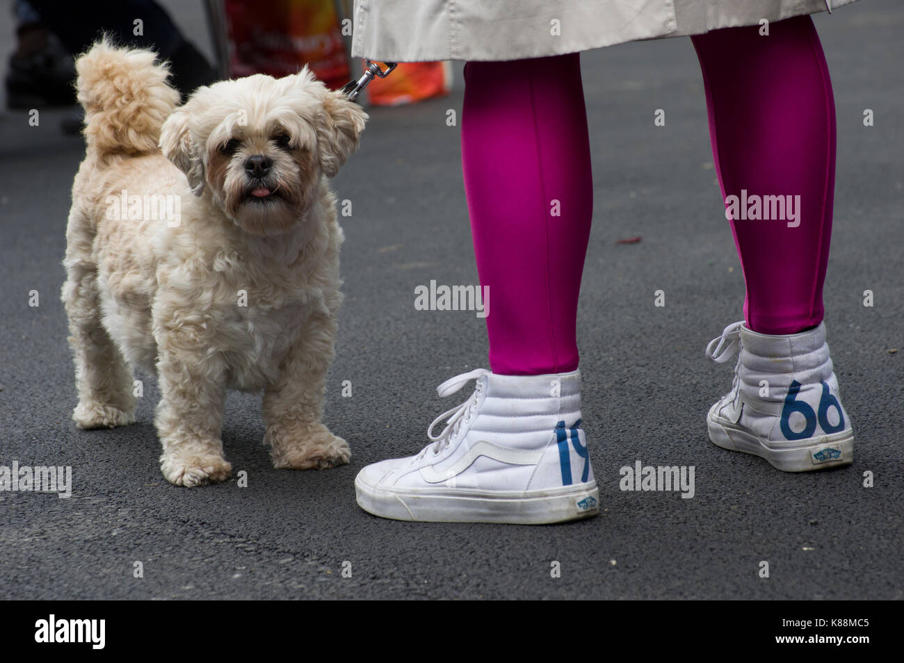 Woman's legs with hot pink or fuscia stockings and white tennis shoes with the year 1966 on them standing next - Stock Image