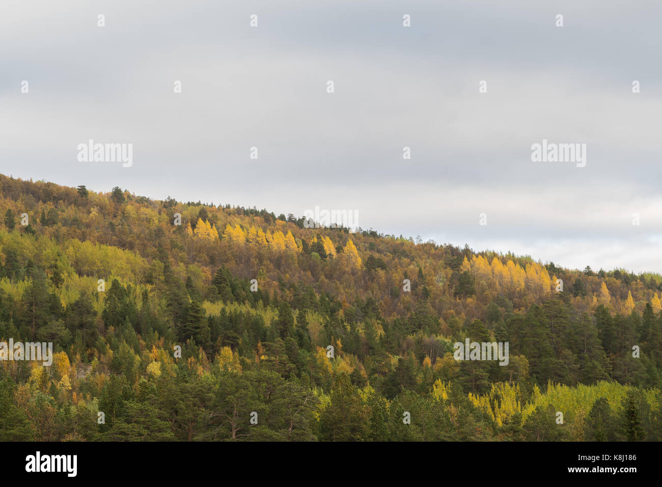 forest-on-hillside-with-different-trees-