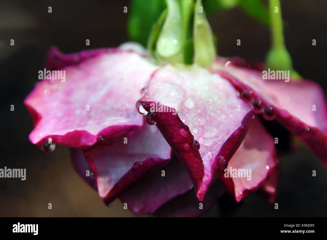 Shreveport Stock Photos Shreveport Stock Images Alamy